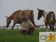 Como comprar cavalos: cuidados com o cavalo