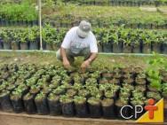 Como montar uma empresa de manutenção de jardins: herbicida