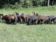 Porto Seguro sedia a primeira exposição de ovinos e caprinos