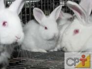 Criação de coelhos: utilidade econômica do coelho