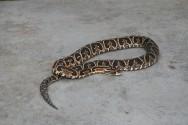 Implantação de um serpentário: instalações e viabilidade de comercialização de serpentes