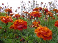 Como cuidar das plantas na primavera