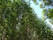 Como fazer a reposi��o florestal
