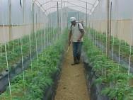 Estudo mostra o consumo de org�nicos no Brasil