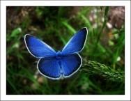 Como criar borboletas