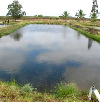 Como construir e abastecer tanques de peixes cursos a for Como fabricar tanques de agua para rusticos