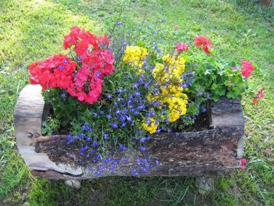 Plantas de Sol Costumam se Desenvolver Bem em Solo Basicamente de