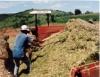 Aprenda Fácil Editora: Tire suas dúvidas sobre a alimentação do gado na seca