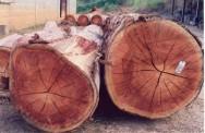 Principais microrganismos que atacam a madeira