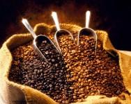Aprenda a produzir um café de qualidade