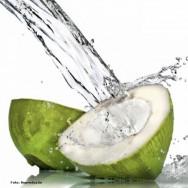 Produção de coco: uma viável alternativa de renda