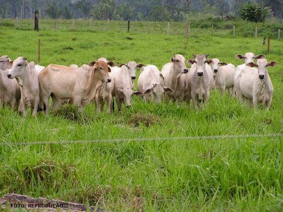 Resultado de imagem para choque elétrico gado