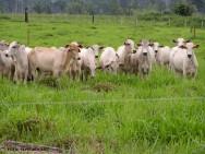 Cercas el�tricas na fazenda: um m�todo eficaz e barato