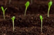 O Nitrogênio é essencial para a formação das proteínas, substâncias que fazem parte dos tecidos vegetais.