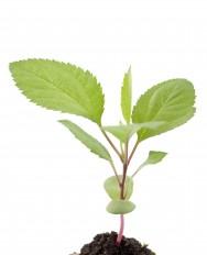 Nutrição de plantas - principais nutrientes e funções