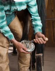 Ferrageamento de cavalos - identificação e tipos de ferraduras para cavalos de corrida e de raça