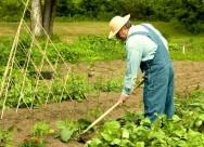 Acidente de trabalho rural - cuidados pessoais