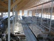 O confinamento de bovinos leiteiros está intimamente associado à intensificação da produção de leite.