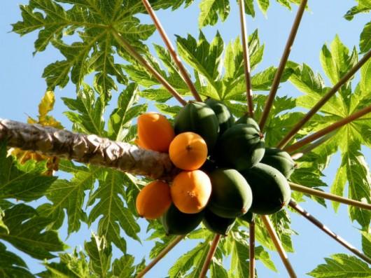 Plantação de árvores frutíferas - a formação do pomar - Artigos ...