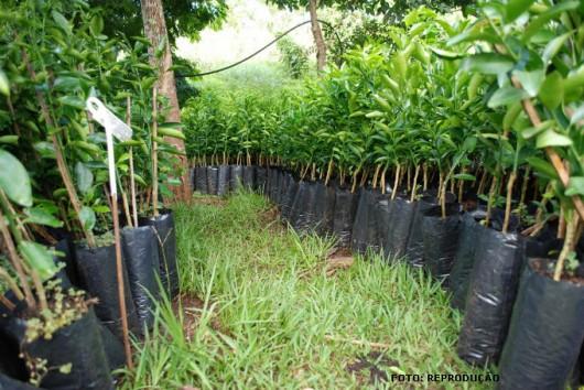 Prefeitura realizará plantio de 2000 mudas de árvores para Recomposição da Mata Ciliar do Ribeirão Guaratinguetá