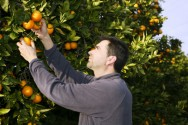 Plantação de árvores frutíferas - manejo do pomar