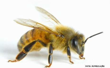 Dificuldade para respirar, dor de cabeça ou tosse podem ser sinais de reação alérgica à picada de abelha ou vespa