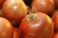Horta - como plantar Cebola (Allium Cepa L)