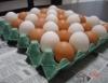 Classificação dos ovos, formas de comercialização e normas para o rótulo