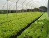 Como construir uma estufa para hortaliças orgânicas