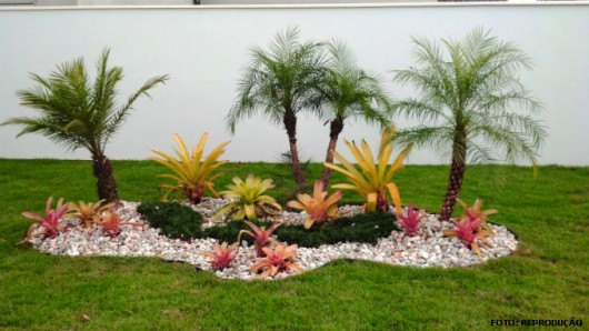 imagens paisagismo jardins:Cultivo de Bromélias – uso no paisagismo