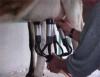 Aprenda Fácil Editora: Custos de produção na pecuária de leite
