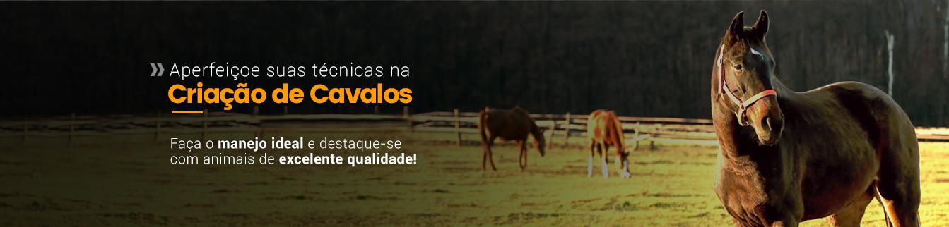 Aperfeiçoe suas técnicas na Criação de Cavalos! Faça o manejo ideal e destaque-se com animais de excelente qualidade!