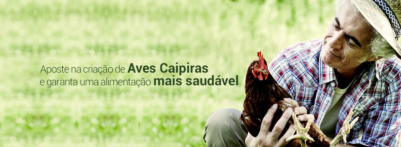 Aposte na criação de Aves Caipiras e garanta uma alimentação mais saudável.