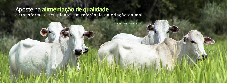 Aposte na alimentação de qualidade e transforme seu plantel em referência na criação animal!