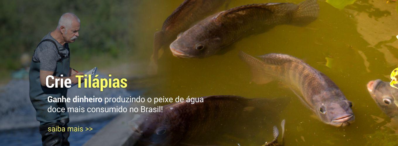 Crie Tilápias! Ganhe dinheiro produzindo o peixe de água doce mais consumido do Brasil!