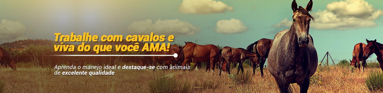 Trabalhe com cavalos e viva do que você ama! Aprenda o manejo ideal e destaque-se com animais de excelente qualidade!