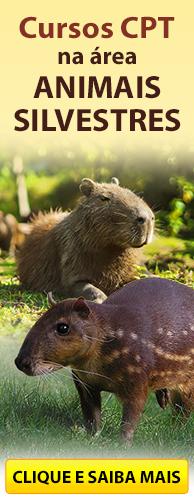 Conheça os Cursos CPT na área Animais Silvestres. Clique aqui.