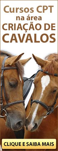 Conheça os Cursos CPT na área Criação de Cavalos. Clique aqui.