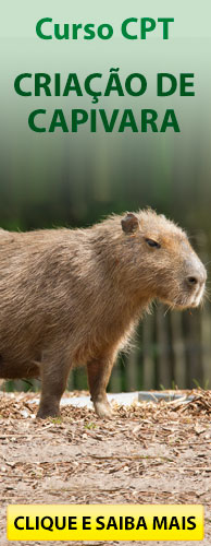 Curso Criação de Capivara. Clique e conheça.