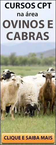 Curso CPT na área Criação de Ovinos. Clique aqui e conheça!