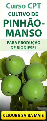 Curso CPT Cultivo de Pinhão-Manso para Produção de Biodiesel. Clique aqui e conheça!