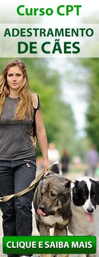 Curso CPT Adestramento de Cães. Clique aqui e conheça!