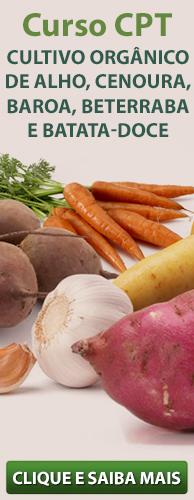 Curso CPT Cultivo Orgânico de Alho, Cenoura, Baroa, Beterraba e Batata-Doce. Clique aqui e conheça!