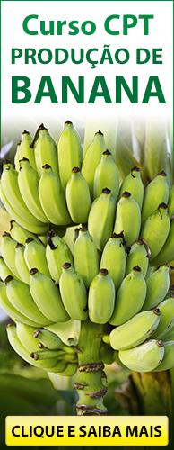 Curso CPT Produção de Banana. Clique aqui e conheça!