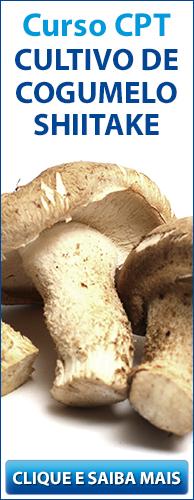 Curso CPT Cultivo de Cogumelo Shiitake. Clique aqui e conheça!