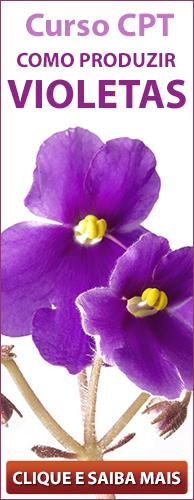 Curso CPT Como Produzir Violetas. Clique aqui e conheça!
