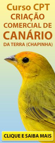 Curso CPT Criação Comercial de Canário da Terra (Chapinha). Clique aqui e conheça!