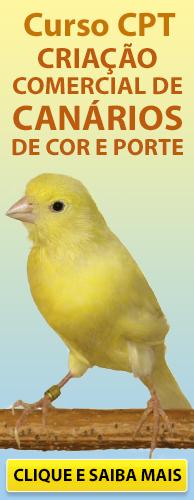 Curso CPT Criação Comercial de Canários de Cor e Porte. Clique aqui e conheça!