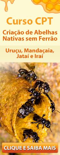 Curso CPT Criação de Abelhas Nativas sem Ferrão - Uruçu, Mandaçaia, Jataí e Iraí. Clique aqui e conheça!