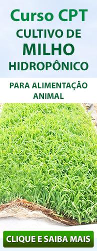 Curso CPT Cultivo de Milho Hidropônico - Para Alimentação Animal. Clique aqui e conheça!